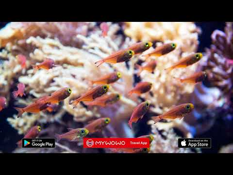 Sentosa – Marine Life Park – Singapur – Audioguía – MyWoWo Travel App