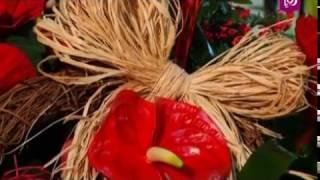 نبتة الكريسماس - م. أمل القيمري