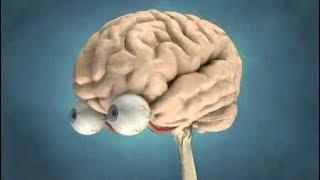 Beyin mucizesi - Türkçe Belgesel izle
