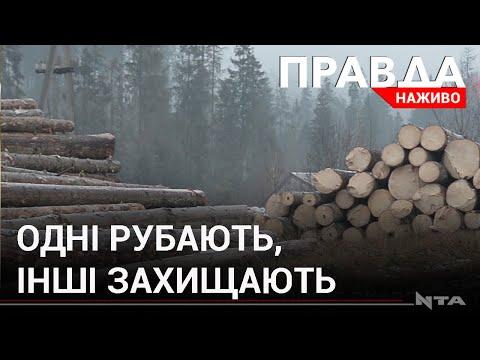 Телеканал НТА: Погрози та напади...за ліс! Що відбувається на Львівщині?