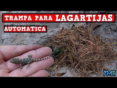 Download Trampa Para LAGARTIJAS, Iguanas Y REPTILES Casera en Acción| TUTORIAL| YMX SUPERVIVENCIA