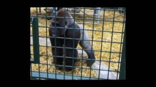 Смешные дикие животные в зоопарках