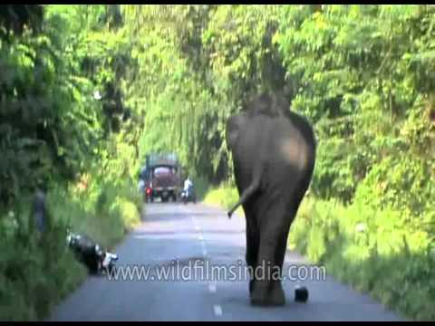Elephant attack in W