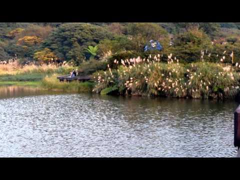 音樂磁場-絕情雨, 大屯自然公園B Taiwan