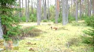 Релакс от природы - ДАРЫ ЛЕСНЫХ ЭЛЬФОВ прогулка за грибами Клёво...