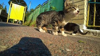 Котят выбросили на автобусную остановку  Кошки  Бездомные Котята  Животные Cats Kitten