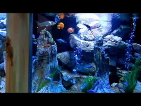 AllFish Emporium Visit Episode 36 Pt. 1