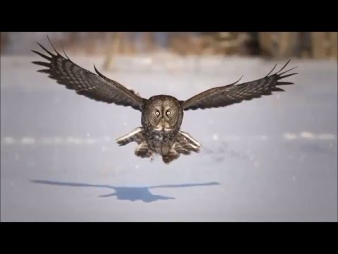 Broken Heart - Epic Beauty Of Nature Slow Motion HD (house trance)