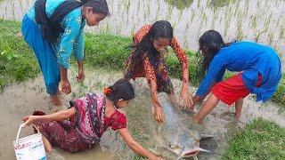 Wow! Beautiful Girls Fishing By Hand | Traditional Fish Catch By Beautiful Girls