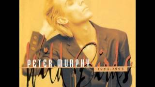 Peter Murphy_The Scarlet Thing in You