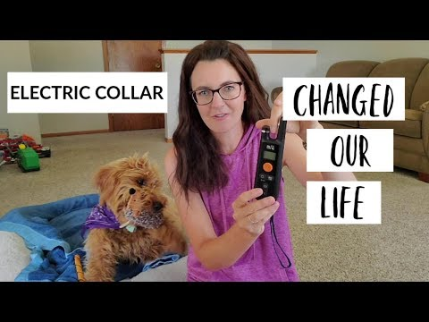 Electric Collar Training for Dogs | Review