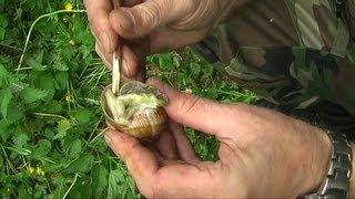 Živočišná strava-šneci,Food in nature-snail