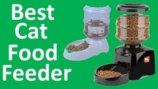 Best Cat Food Feeder 2019 |