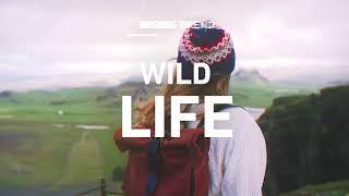Wild Life - 2020 Creative Trends | Shutterstock