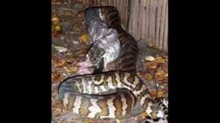 В мире животных фильм для маленьких.