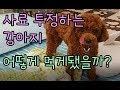 사료투정하는 강아지! 어떻게 먹게됐을까? (feat.만지지마!)
