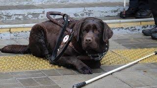 Слепой ищет деньги на лечение Барри