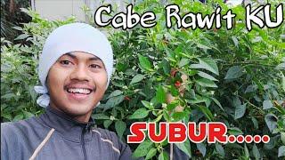 Download lagu Cabe Rawit ku SUBUR gaess.....