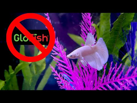 DON'T Buy A Glow Betta, Try This Instead
