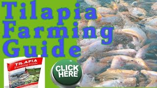 Tilapia Farmin Guide Book, Pdf Review