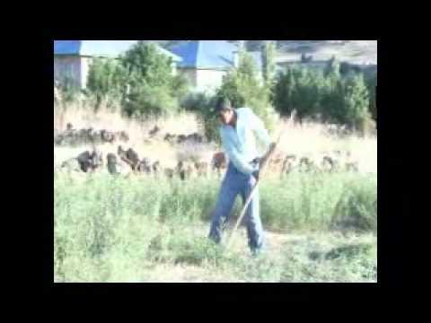 caner 1 VIDEO.wmv