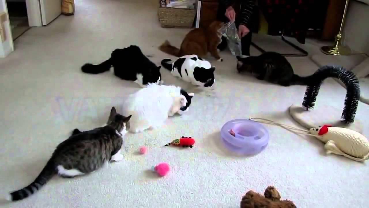 гифки кошки смешные на ютубе выбрать мебель