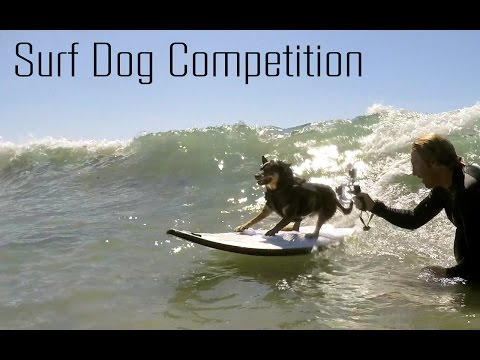 Unleashed | Petco Dog Surf Competition | 2015