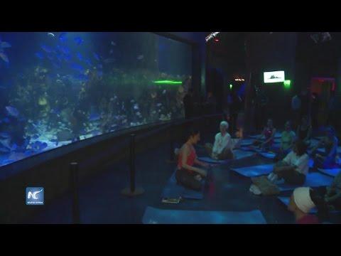 Inspira acuario en México a relajarse con yoga