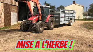 Mise a l'herbe 2019 !