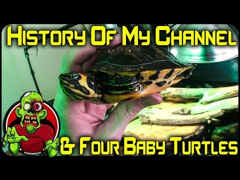HISTORY OF MY CHANNEL & MY TURTLE POND