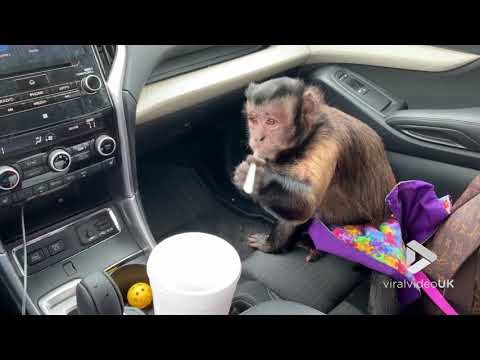 News Around The Lone Star State - Monkey Helps Herself To Some Soda