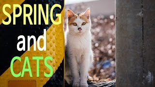Feral Cats - Spring and Cats 길고양이 카라멜과 모녀 꽃순이와 둥글이 #Catumentary