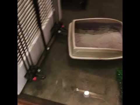 Sump Pump Failure water damage