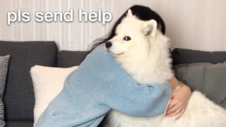 Hugging my dog for too long [FUNNY REACTION] 😂 thumbnail