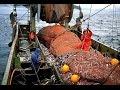Alaska Pollock Fishing full documentary - What's Trending Now ! Reshare