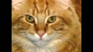 С днём рождения котята!!!