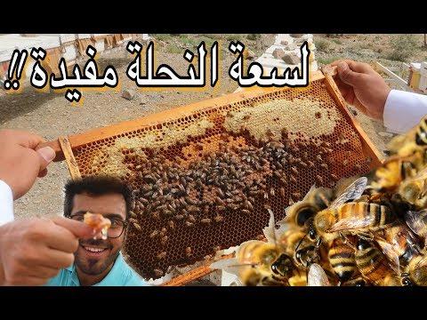 تحدي مواجهة النحل و أكل العسل من الخلية !! وادي قرن- الطائف | Saudi Honey experience