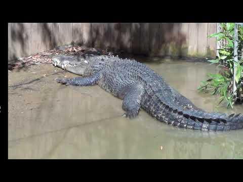Hartley's Creek Crocodile Farm FNQ Australia