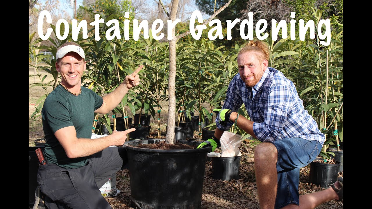 Container Growing a Fruit Tree in Your Garden - YouTube