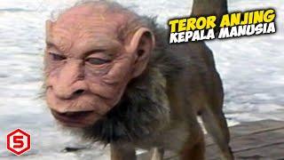 Makhluk Anjing Berkepala Manusia Teror Warga Di Kalimantan