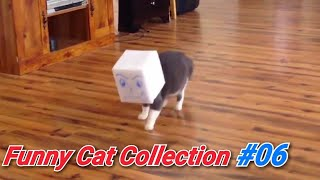 [#06] If you want a funny cat, watch this video!