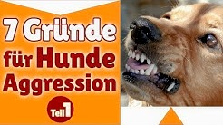 Aggressive Hunde ✔ Stephanie nennt 7 Gründe für Hunde Aggression - Teil #1 ✔