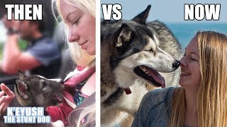 my-husky-puppy-vs-adult-cute-funny-comparison