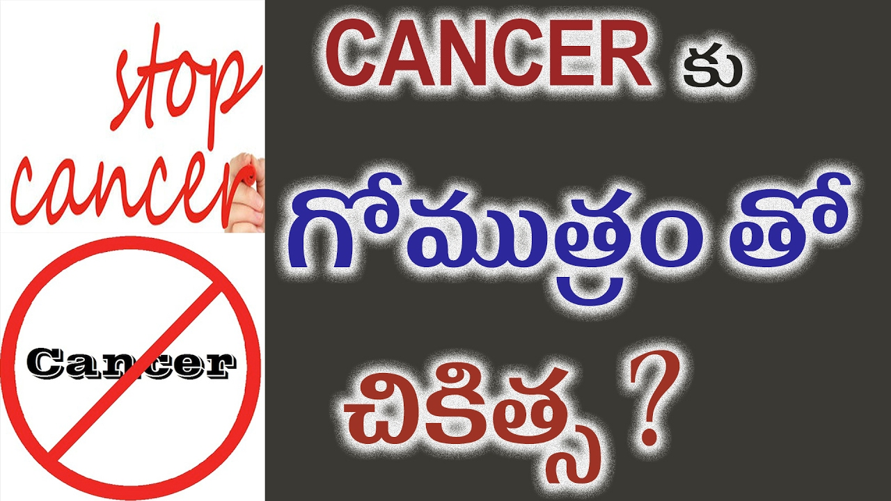 COW URINE CAN CURE CANCER? || Anti Cancer Activity Of Cow Urine ||