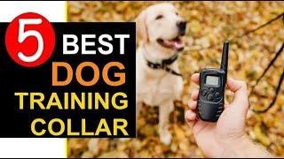 Dog Training Collar 🏆 Top 5 Best Dog Training Collar in 2020