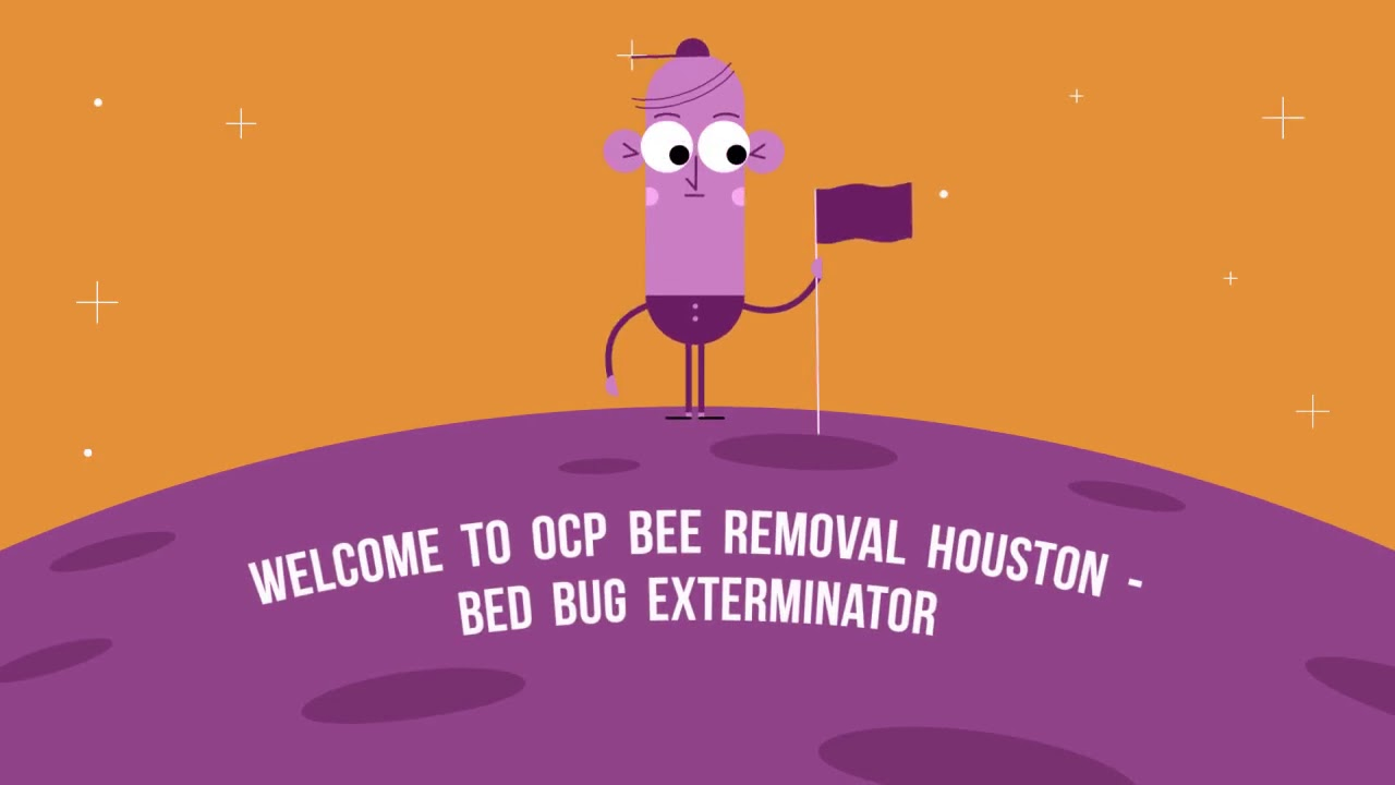 Certified OCP Bee Removal in Houston, TX