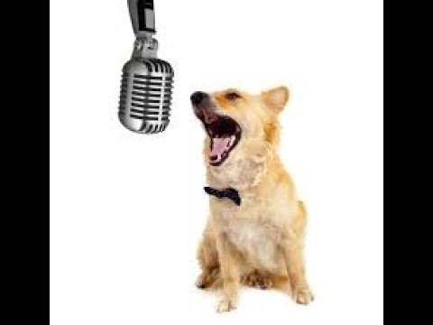Dog Sings - DESPACITO....