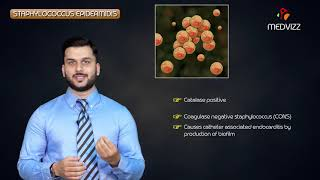 staphylococcus epidermidis quick review - Medvizz microbiology animations