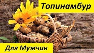 Топинамбур - Полезные Свойства. Земляная Груша. Польза и Вред