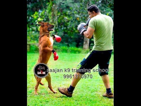 saajan k9 training school at  pala 09961310970